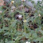 biodiversity_11499_1