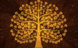 ต้นไม้ที่ปลูกเเล้วเรียกโชคลาภเงินทองมาสู่เจ้าของ